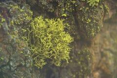 Красивый зеленый мох в древесине и свет как раз любят сказка в национальном парке секвойи Стоковая Фотография