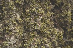 Красивый зеленый мох в древесине и свет как раз любят сказка в национальном парке секвойи Стоковые Фотографии RF