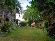 Красивый зеленый сад около моего дома стоковое фото rf