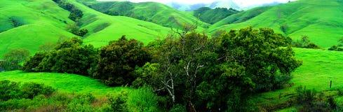 Красивый зеленый ландшафт Стоковое Изображение