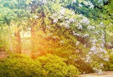 Красивый зеленый лес Стоковые Изображения