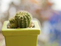 Красивый зеленый кактус Стоковые Изображения