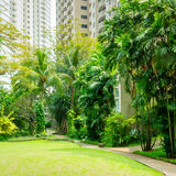 Красивый зеленый парк с путем замотки Стоковое Изображение