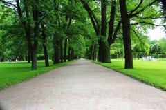 Красивый зеленый переулок Стоковые Изображения