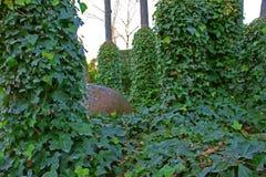 Красивый зеленый плющ густолиственный среди деревьев с опарником грязи среди его 4 Стоковая Фотография
