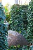 Красивый зеленый плющ густолиственный среди деревьев с опарником грязи среди его 6 Стоковые Фото