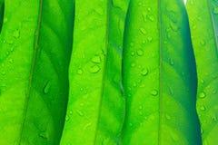 Красивый зеленый цвет выходит польза текстуры для предпосылки Стоковое Изображение RF