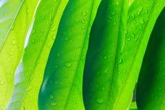 Красивый зеленый цвет выходит текстура Стоковое Изображение RF