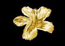Красивый золотой цветок бесплатная иллюстрация