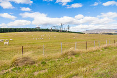 Красивый здоровый paddock с овцами Стоковая Фотография