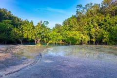 Красивый изумрудный бассейн в глубоком лесе на Krabi ТАИЛАНДЕ Стоковые Фото