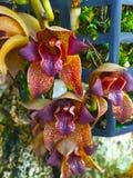 Красивый интенсивный цветок орхидеи Стоковая Фотография