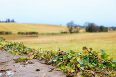 Красивый ирландский осенний ландшафт fields пейзаж в Co.Cork, Ирландии. Стоковое Фото