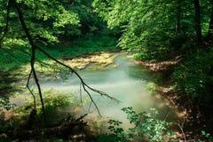 Красивый источник ljubljanica в vrhnika, Словении стоковое изображение rf