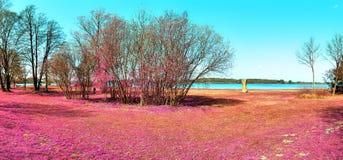 Красивый и красочный ландшафт фантазии в азиатском пурпурном ультракрасном стиле фото стоковая фотография