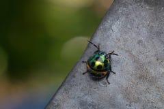Красивый и красочный ladybug Стоковая Фотография