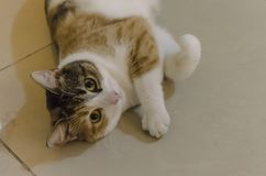Красивый и милый кот с большими глазами стоковые изображения rf