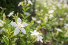 Красивый и милый небольшой белый цветок на запачканной предпосылке palnts стоковое изображение