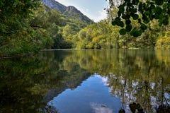 Красивый и расслабляющий лес с рекой и предпосылкой горы Стоковые Фотографии RF
