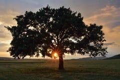 Красивый и старый дуб Стоковая Фотография