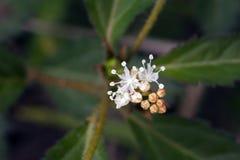 Красивый и сумасбродный микро- белый цветок Стоковое Изображение RF