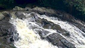Красивый каскадируя водопад в тропических джунглях, акции видеоматериалы