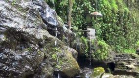 Красивый каскадируя водопад в тропических джунглях, сток-видео