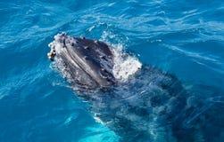 Красивый кит Стоковое Фото