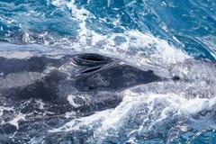 Красивый кит Стоковая Фотография