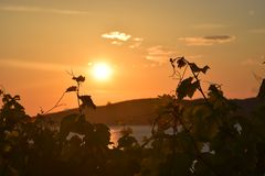 Красивый комплект солнца на море смотря через листья дерева стоковое изображение rf