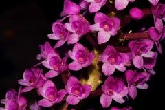 Красивый комплект цветка орхидеи стоковое фото rf