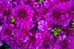 Красивый комплект бутонов цветка Стоковые Фото