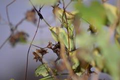 Красивый конец вверх выходит с blurr стоковые фотографии rf