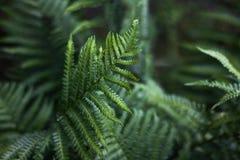 Красивый конец-вверх лист папоротника на зеленой предпосылке стоковое фото