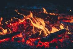 Красивый конец-вверх огня, поход в древесинах Стоковые Фото