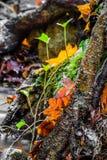 Красивый конец детали вверх земли леса в сезоне падения в ярких селективных цветах Стоковые Фото