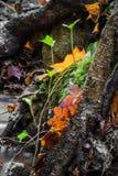 Красивый конец детали вверх земли леса в сезоне падения в ярких селективных цветах Стоковая Фотография