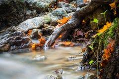 Красивый конец детали вверх реки шелковистой ровной сатинировки мягкого пропуская в цветах падения леса ярких селективных Стоковое фото RF