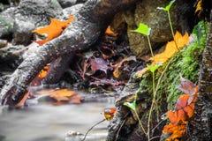 Красивый конец детали вверх реки шелковистой ровной сатинировки мягкого пропуская в цветах падения леса ярких селективных Стоковые Изображения RF