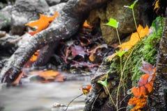 Красивый конец детали вверх реки шелковистой ровной сатинировки мягкого пропуская в цветах падения леса ярких селективных Стоковое Изображение RF