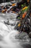 Красивый конец детали вверх реки шелковистой ровной сатинировки мягкого пропуская в цветах падения леса ярких селективных Стоковое Изображение