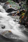 Красивый конец детали вверх реки шелковистой ровной сатинировки мягкого пропуская в цветах падения леса ярких селективных Стоковые Изображения