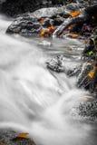 Красивый конец детали вверх реки шелковистой ровной сатинировки мягкого пропуская в цветах падения леса ярких селективных Стоковая Фотография