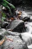 Красивый конец детали вверх реки шелковистой ровной сатинировки мягкого пропуская в цветах падения леса ярких селективных Стоковые Фото