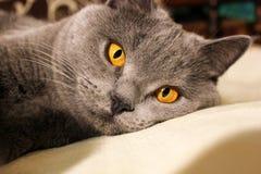 Красивый конец кота вверх стоковое изображение