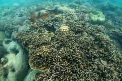 Красивый коралловый риф в лорде Loughbolough или острове дракона моря, Стоковая Фотография