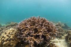 Красивый коралловый риф в лорде Loughbolough или острове дракона моря, Стоковые Фотографии RF