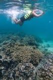 Красивый коралловый риф в лорде Loughbolough или острове дракона моря, Стоковое Изображение