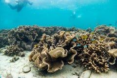 Красивый коралловый риф в лорде Loughbolough или острове дракона моря, Стоковые Изображения