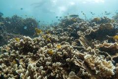 Красивый коралловый риф в лорде Loughbolough или острове дракона моря, Стоковые Фото
